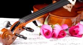 Cần gia sư dạy đàn Violin tại quận 9